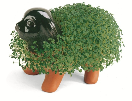 Chia pet dog