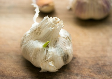 Green Garlic Sprout