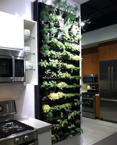 Indoor wall herb garden